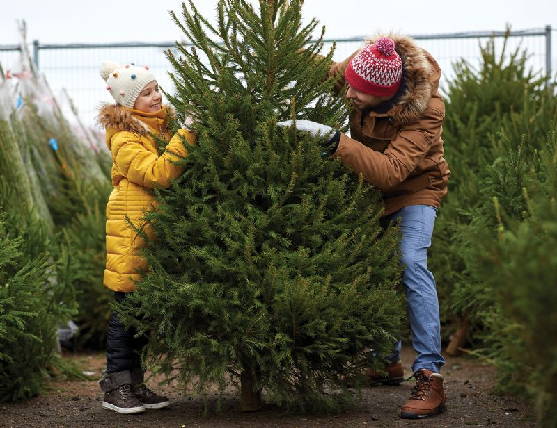 Dad and young daughter having fun choosing a Christmas tree