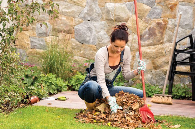 Woman raking autumn leaves garden compost pile